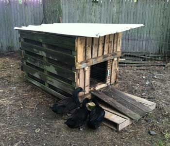 Duck House 101 ~ How to build a duck house.  _via http://www.homegrown.org/forum/topics/duck-house-101
