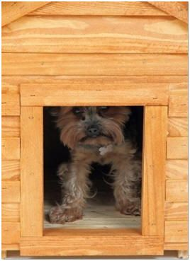 Do It Yourself Dog House Plans And Building Guides Build Your Dog