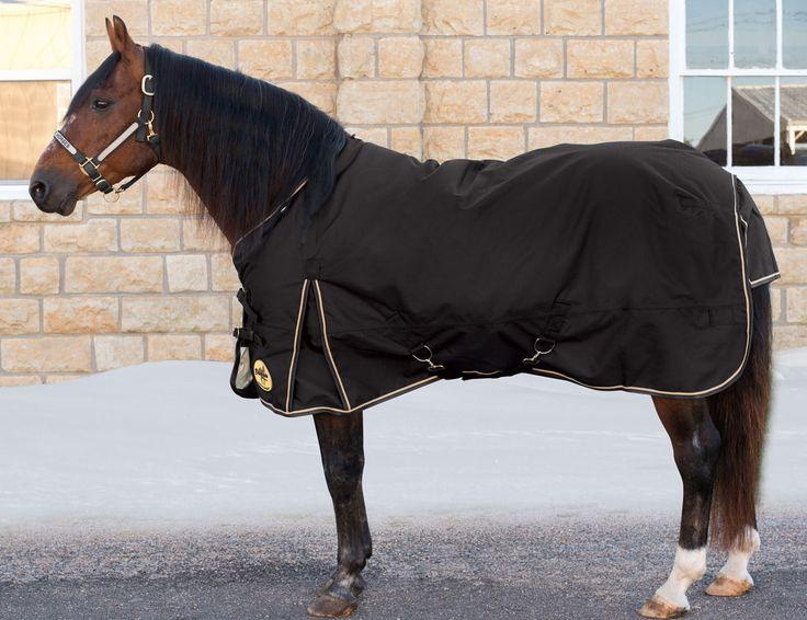 17 Best Ideas About Horse Blanket On Pinterest Horse