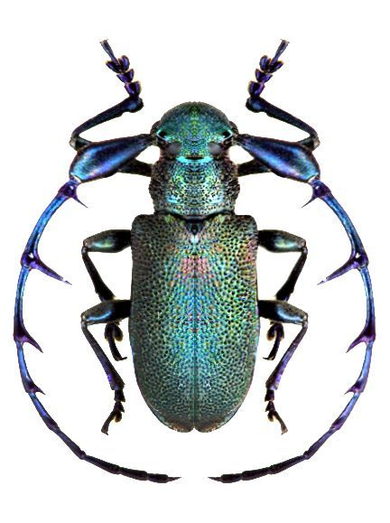 Gorgeous Beetle 1 Beatles Insects Beetle Insect Beetle