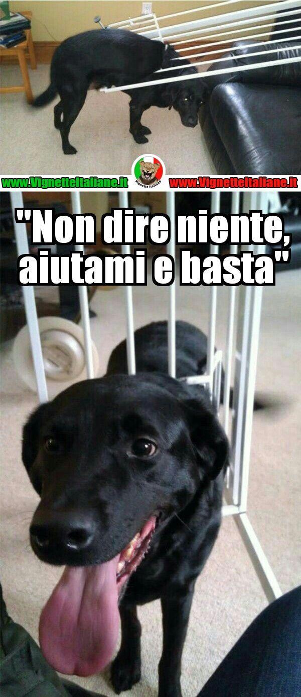 #Cane in #gabbia #vignetteitaliane.it #vignette #italiane #immagini #divertenti #lol #funnypics #umorismo #humour #humor #ridere #risate #cani