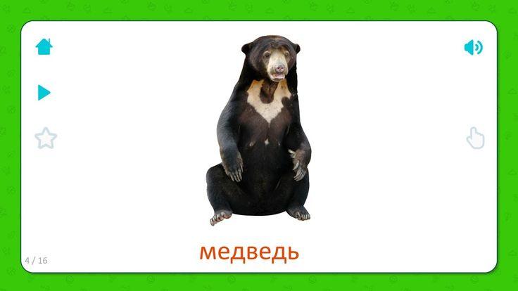 Медведь - Дикие Животные - Карточки Для Детей #длядетей