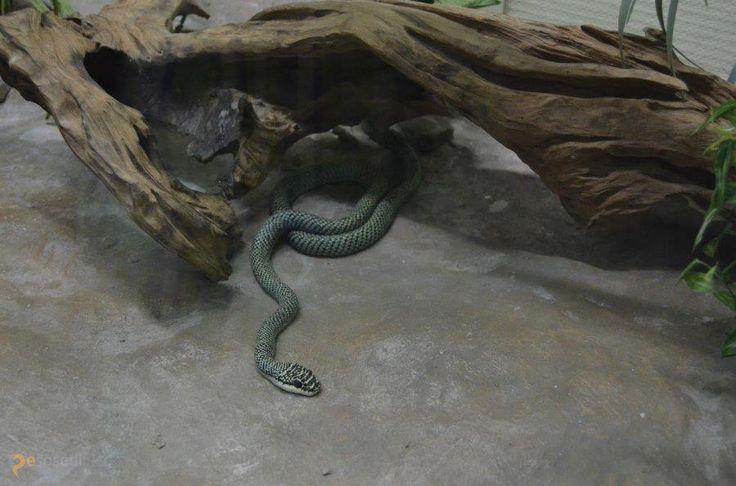 Серпентарий Snake Park – #Кения #Найроби (#KE) Обиталище змей и прочих гадов  ↳ http://ru.esosedi.org/KE/places/1000479668/serpentariy_snake_park/