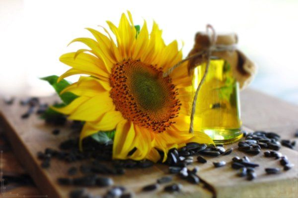 Remove stubborn acne using sunflower oil is an alternative way to obtain skin that is clean, bright, and not dull