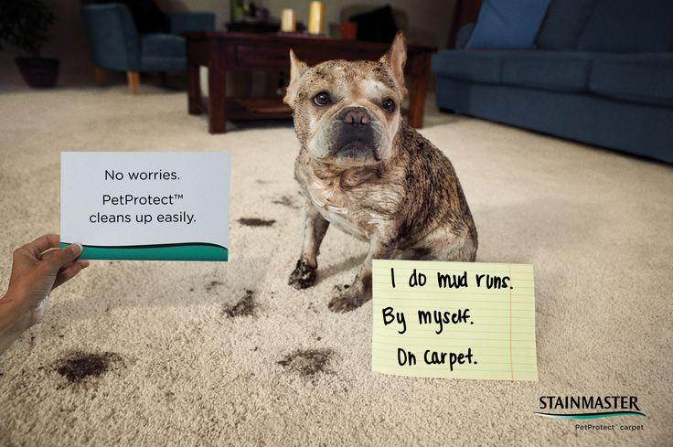 292 Best Carpet Images On Pinterest Carpet Rugs And Carpets