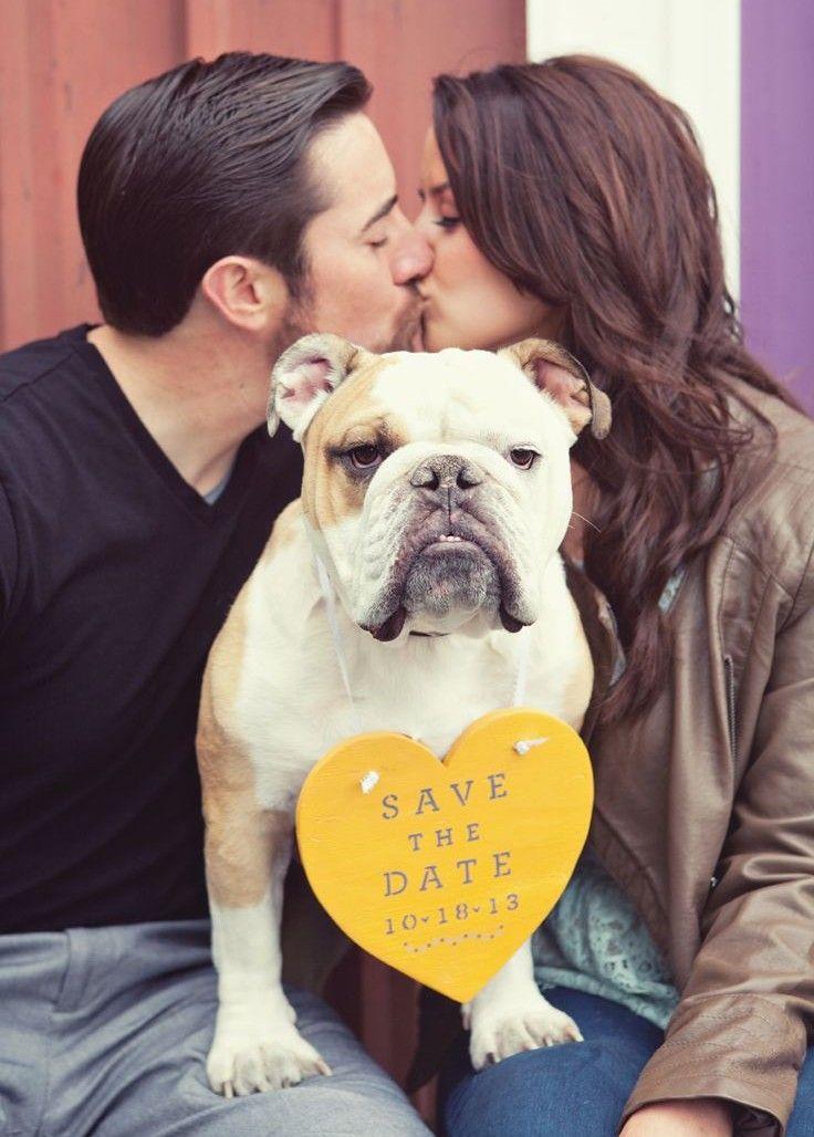 save the date mariage bulldog