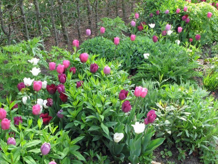 167 besten GartenPflanzen Bilder auf Pinterest Gärten, Natur und - gartenpflanzen