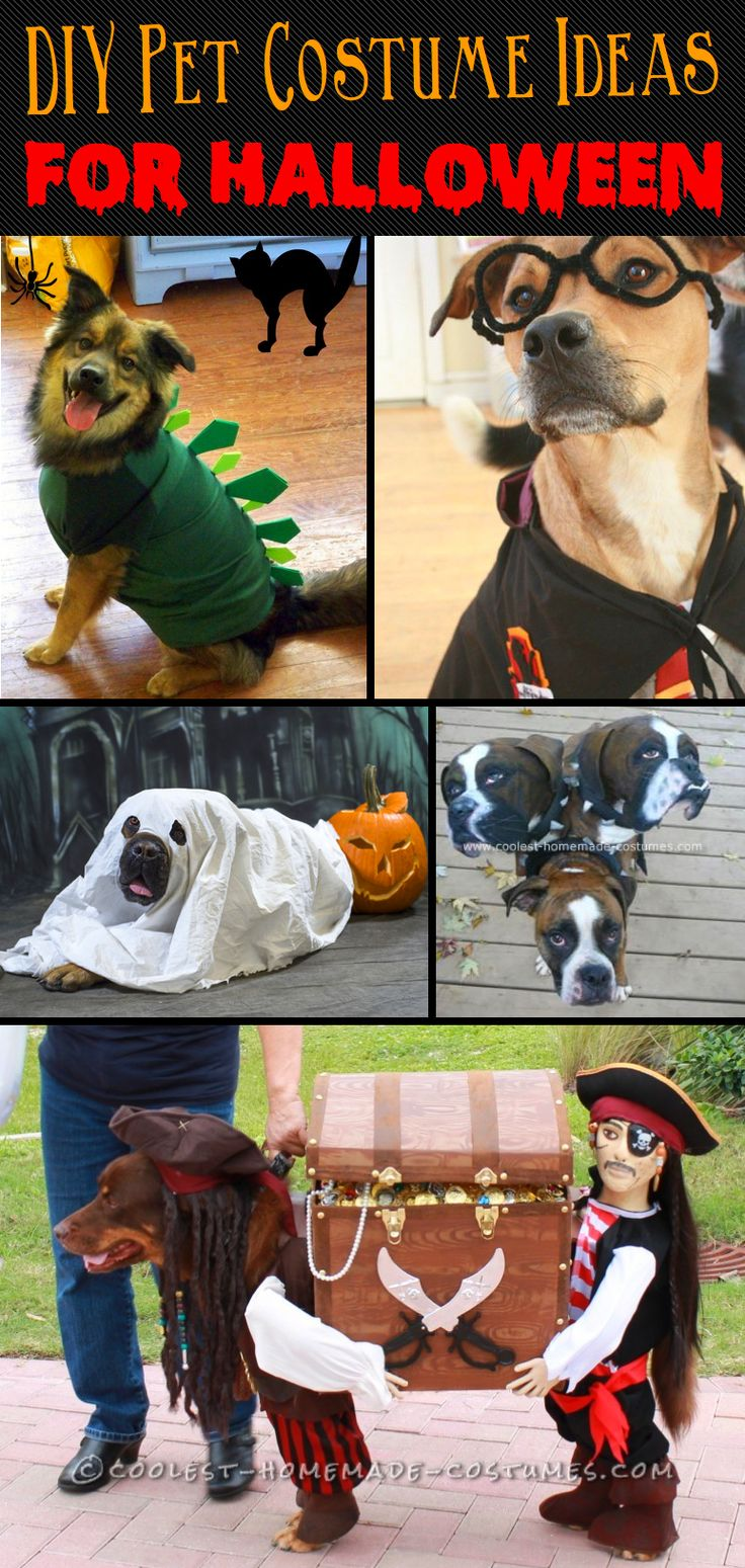 20+ Incredibly Adorable Yet Simple DIY Pet Costume Ideas for Halloween