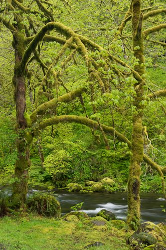 Columbia Gorge, Oregon...Oh all the beautiful moss!