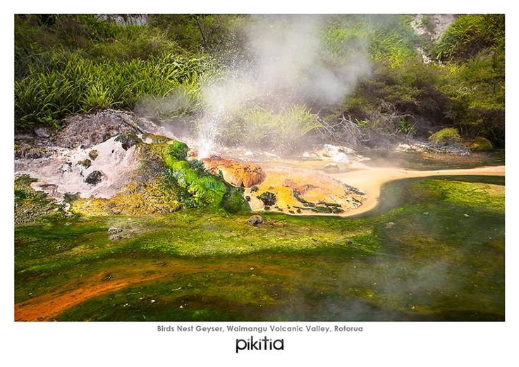 Birds Nest Geyer - Image courtesy of Pikitia Postcards