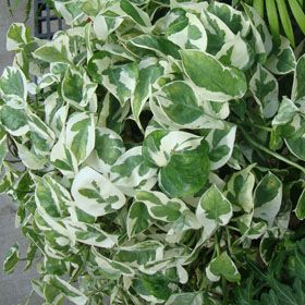 275 best images about para ver crecer on pinterest - Plantas perennes exterior ...