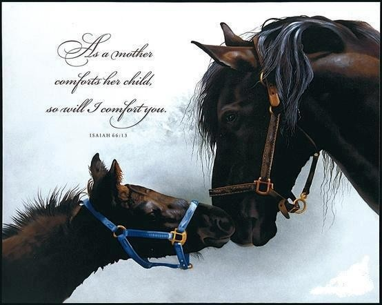 Horses & Quote