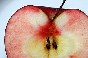 Plant Apple Seeds - wikiHow