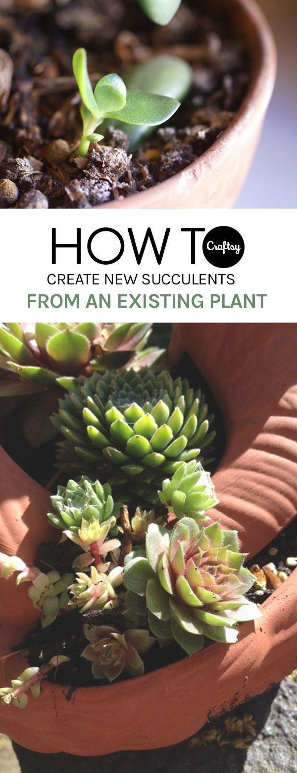Grow Succulents For Free! If you don't want to break the bank, consider propagating succulents yourself.
