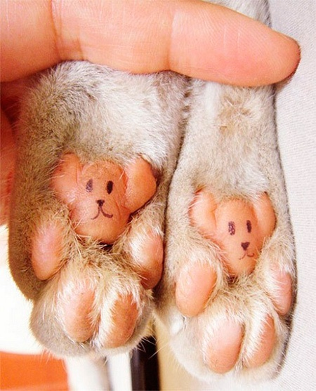 bears: Cat Paw, Teddy Bears, Pet, Bears Paw, Funny Stuff, So Funny, Catpaw, Dogs Paw, Animal