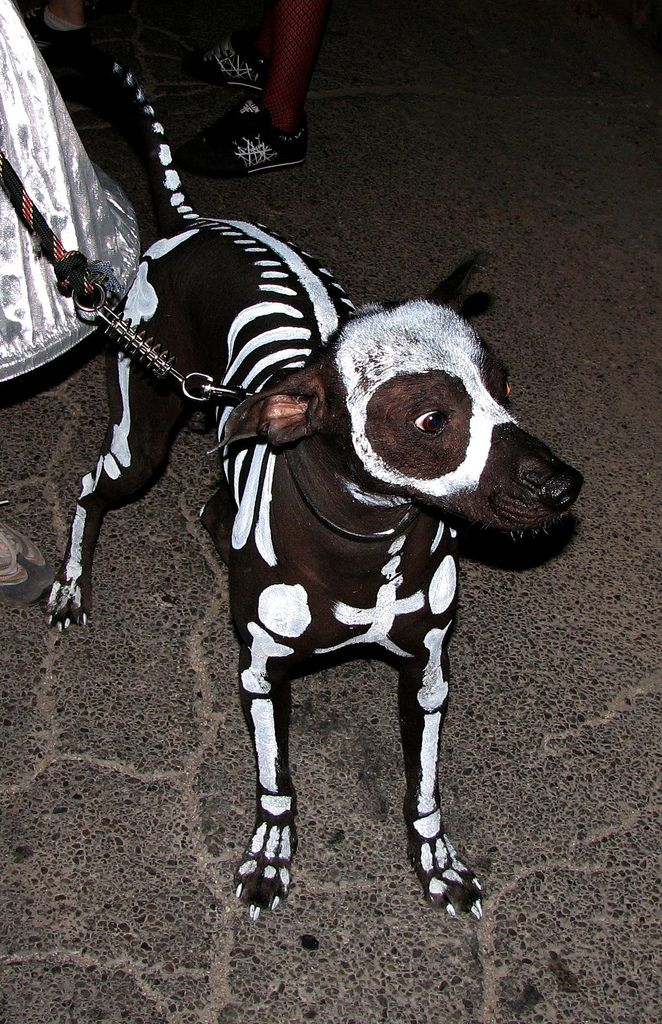 this awesome dog skeleton halloween costume looks pretty easy to make just get some pet safe paint and go to town of course youll need a black dog to - Halloween Costumes For Labradors