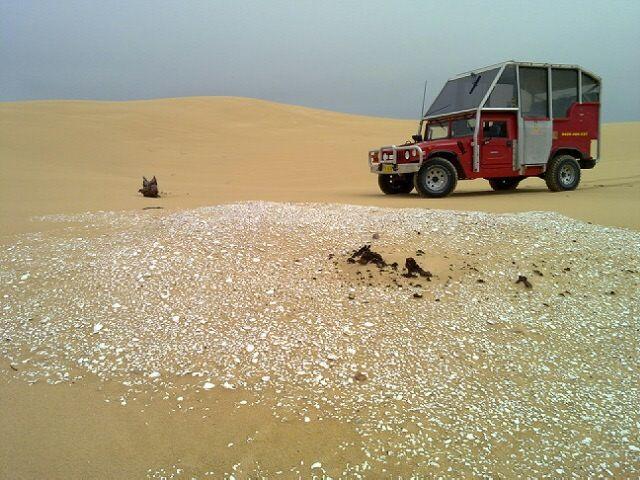 Sand Dune Adventures Hummer Tours Aboriginal Midden Sites #stocktonbeach