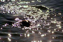 Sun glitter - Wikipedia