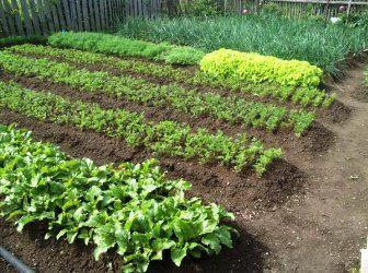 (+1) тема - Севооборот овощных культур: что, после чего сажать в огороде? | 6 соток
