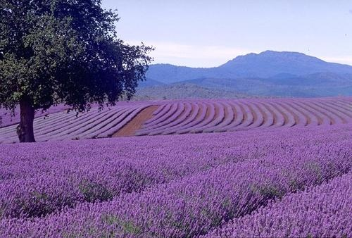 I just wanna lay right down and smell the lavender...