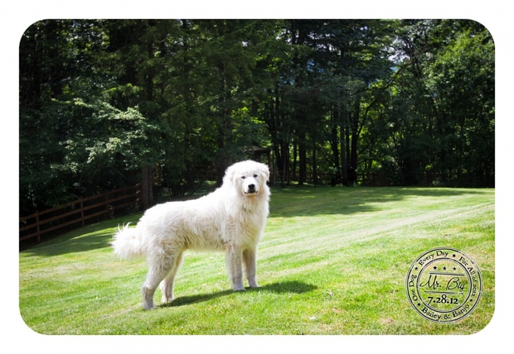 Mr. BIG - July 28: Dogs A Day, July 28, Dogs Photography, Canin Cancer