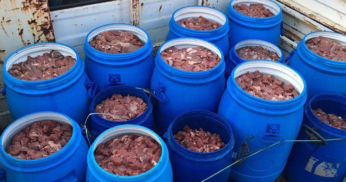 Satışa hazır 5 ton domuz eti ele geçirildi