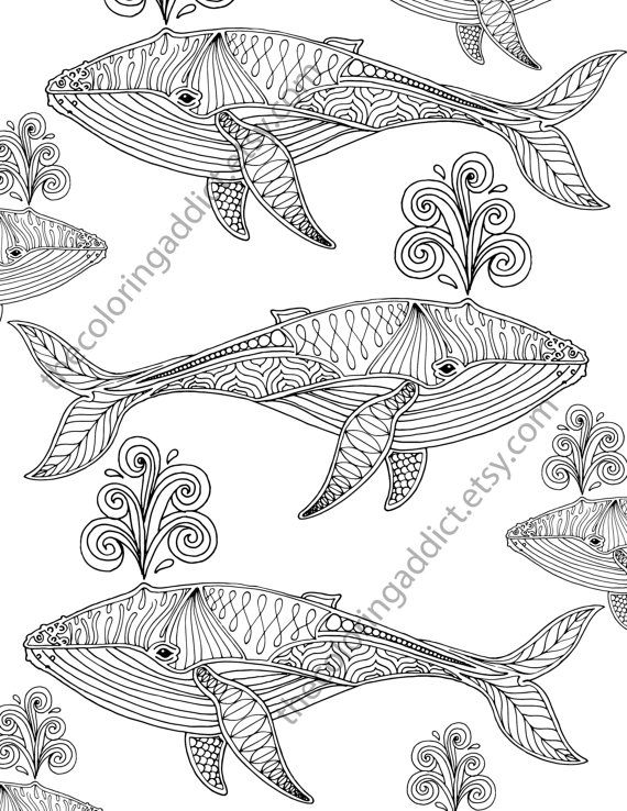 Whale Adult Coloring Page Nautical By TheColoringAddict