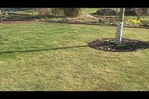 Mit Eisensulfat können Sie hervorragend gegen Moos im Rasen vorgehen. Sie müssen es nur richtig anwenden und einige Punkte beachten.