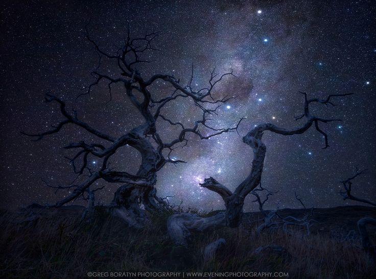 Roots Of Light by Greg Boratyn   https://500px.com/photo/213676991/roots-of-light-by-greg-boratyn?ctx_page=1&from=popular