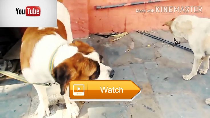 Top funny videos with cute animals  TOP FUNNY VIDEOS PLEASE SEE THE FUN WITH ANIMALS  on Pet Lovers