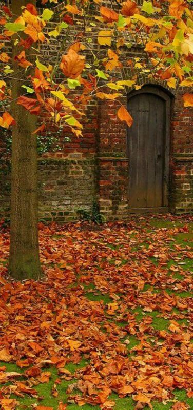 Autumn Leaves in Osterley Park, London   by Laura Nolte