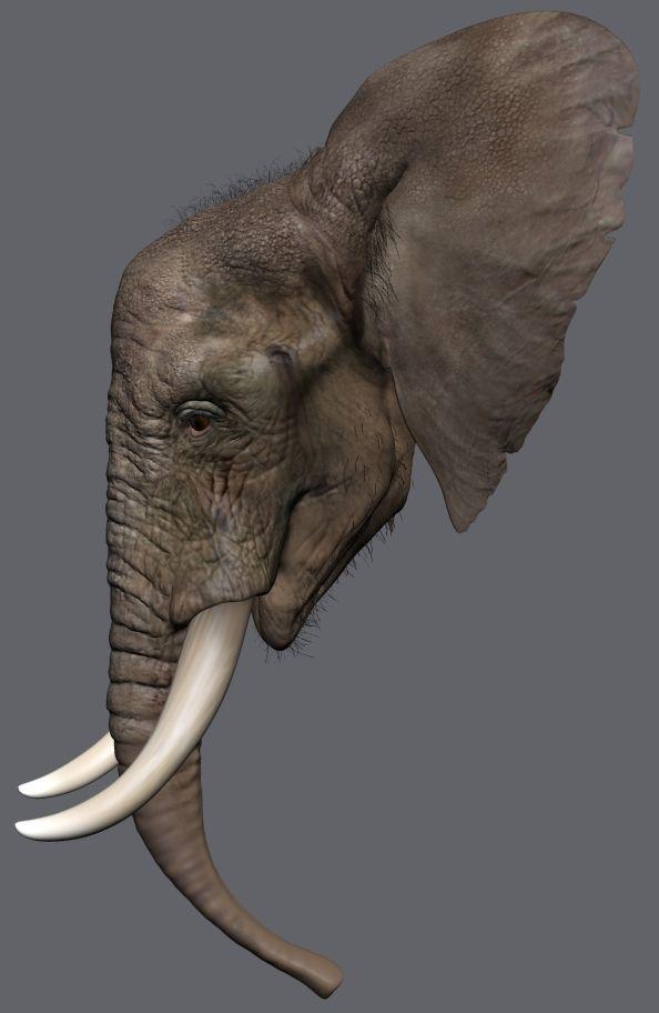 52 best Elephant Anatomy images on Pinterest | Elephants, Elephant ...