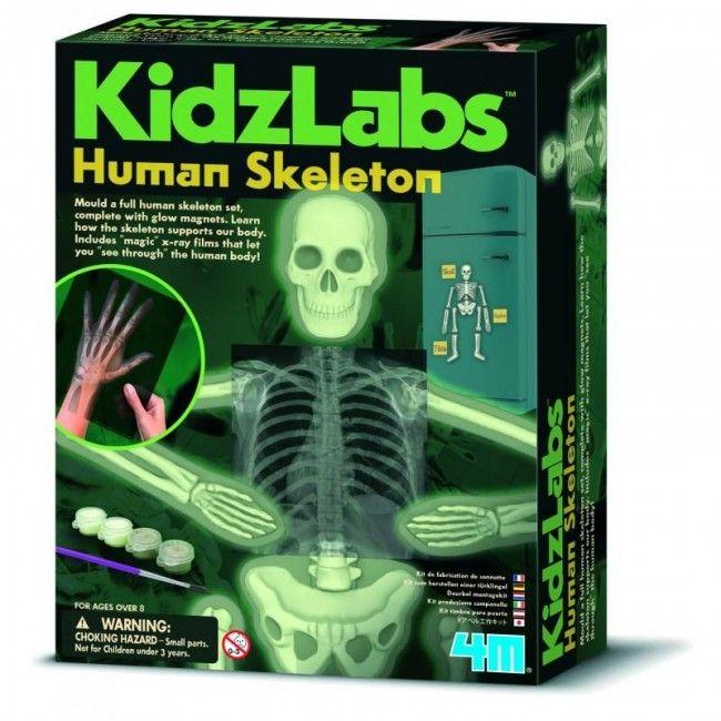 Squelette humain luminescent - Castello | Jeux et Jouets