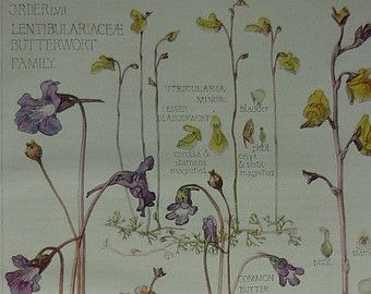 antique BOTANICAL print of various flowers by theStoryOfVintage