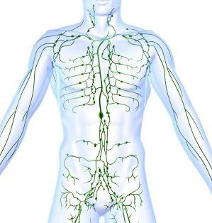 Lymfebanen En Lymfeklier Stations Cytologie Lymfeklier