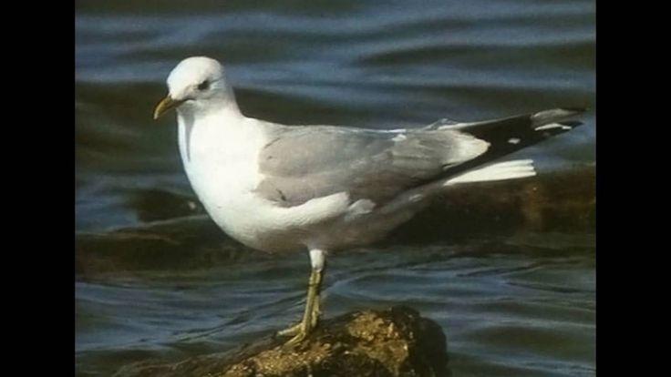Skelligs Wildlife- Top 15 Amazing Birds on Skellig Islands