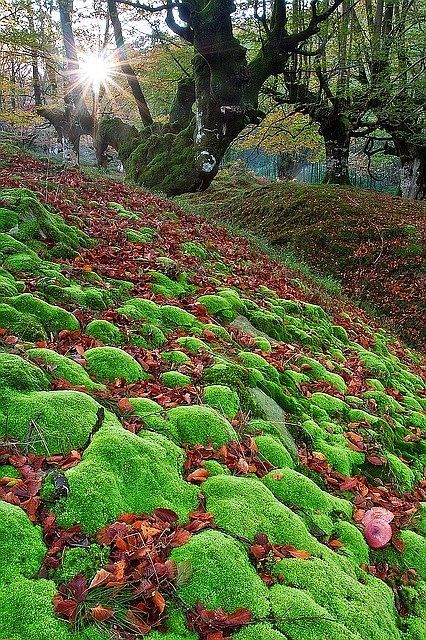 Gorbea Natural Park in the Basque Country in Spain. - Avast Yahoo Canada Search Results
