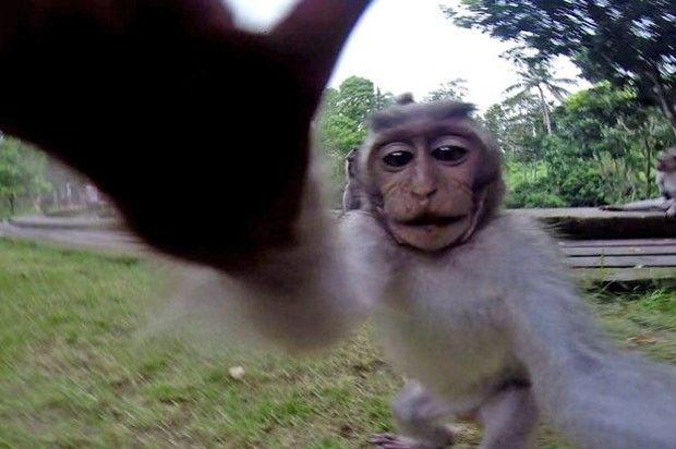 Macaco acabou tirando selfie perfeito sem querer (Foto: Reprodução/YouTube)