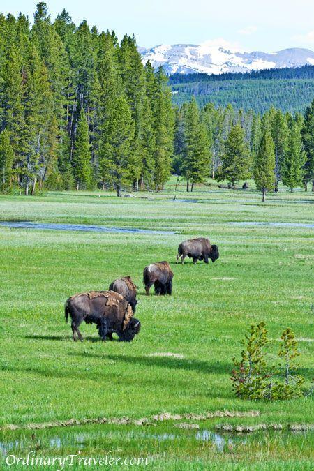 Tips for hiking and camping at Yellowstone National Park ordinarytraveler....