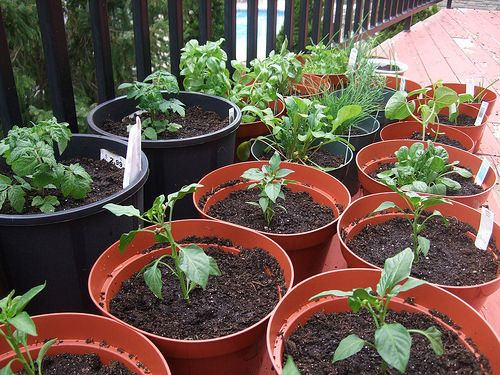 Container vegetable gardening vegetable gardening and for Potted vegetable garden