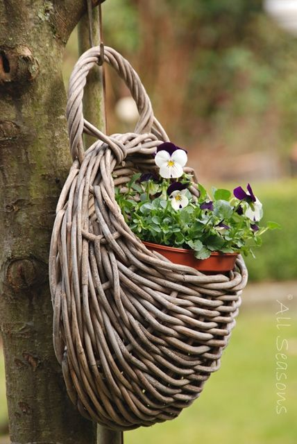 Wicker wall basket hanging from tree with pansies