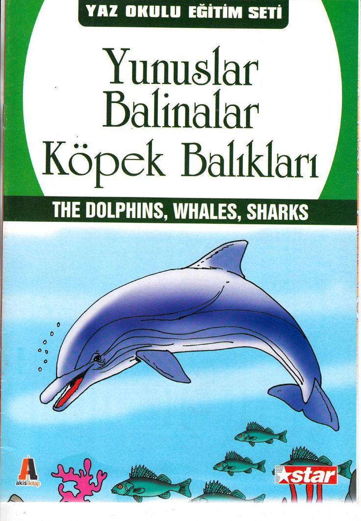 Yunuslar,balinalar,köpek balıkları