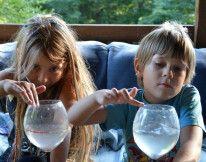 Grające kieliszki – eksperyment dla dzieci