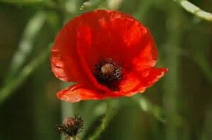 Remembering my wonderful Grandad, who fought in WW1 in France. He wouldn't tell me about the war, he said it was too awful for him to remember and for me to hear. Love you always Grandad xxx