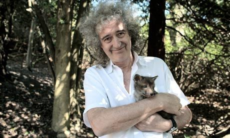 Brian May in the garden of his home, holding a rescued fox cub. Photograph: Martin Godwin for the Guardian