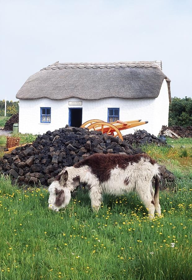 Glenbeigh, Co Kerry, Ireland Donkey