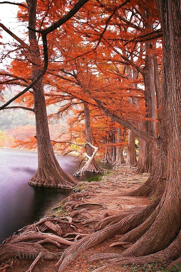 ✯ Garner State Park - Concan, Texas