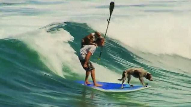 It's not just humans who can enjoy the surf as these two pups expertly show!