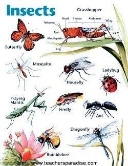 insect chart for kids - Google Search | Kindergarten Art ...