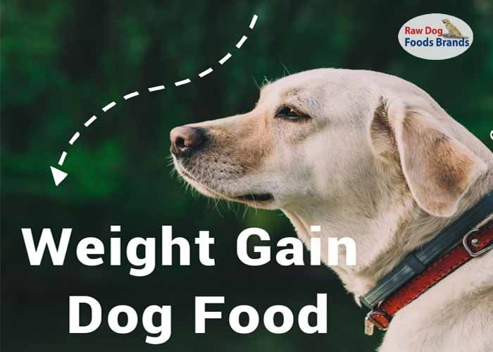 Pin On Best Weight Gain Dog Food